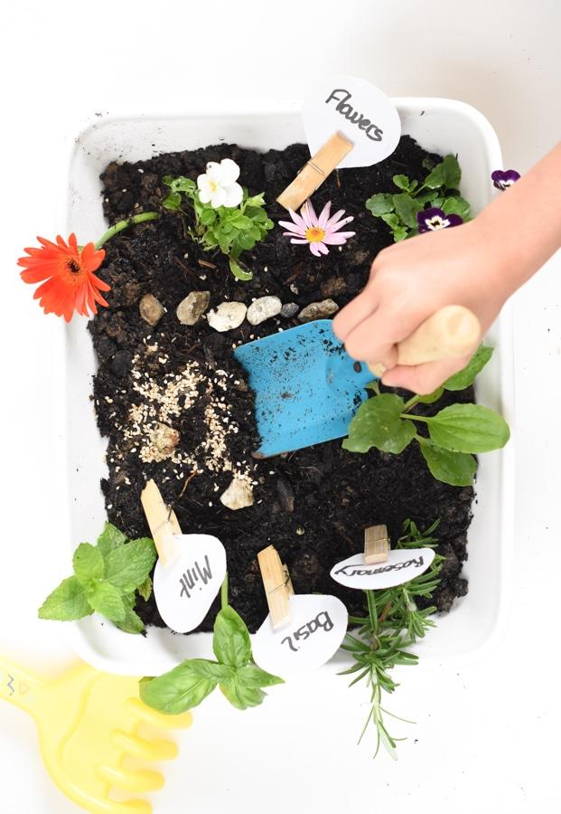 Herb and flower sensory bin